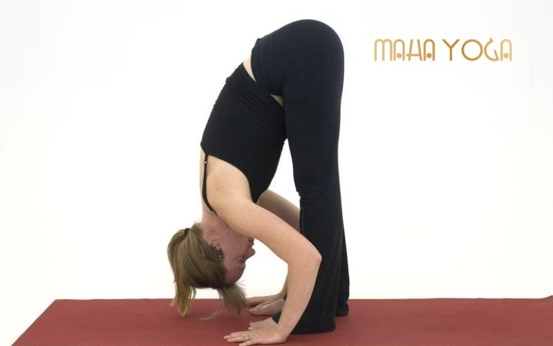 yoga tri dau moi vai gay yoga tri lieu tap luyen yoga tri lieu tai binh duong yoga tri dau lung yoga giai toa cang thang yoga tri thoai hoa dot song co